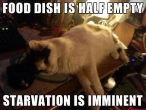 Food Dish is Half Empty
