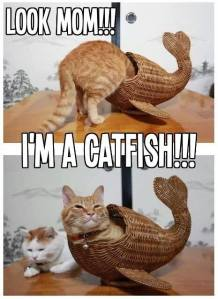 I'm a Catfish