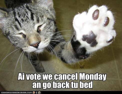 Image result for monday cat pictures