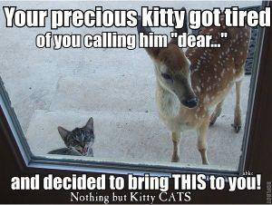 Bringing a Deer