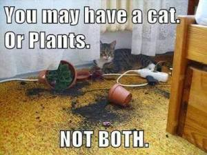You May Have a Cat OR Plants