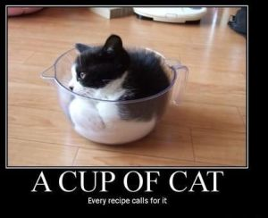 A Cup of Cat