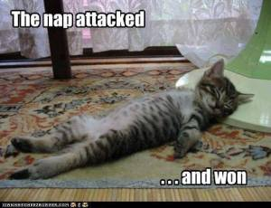 The Nap Attacked