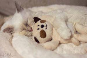 A Cat and His Teddy Bear
