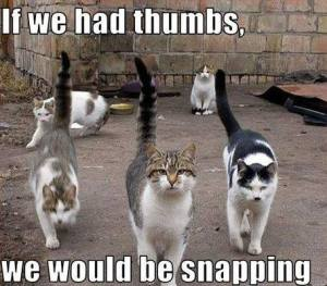 If We Had Thumbs