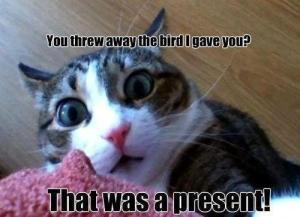 You Threw Away the Bird I Left You