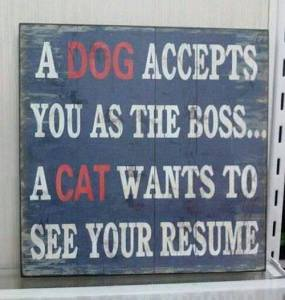 A Cat Wants to See Your Resume