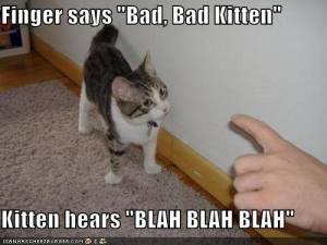 Finger Says Bad Bad Kitten