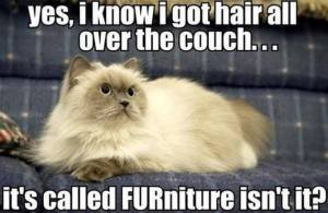 Hair All Over the Couch