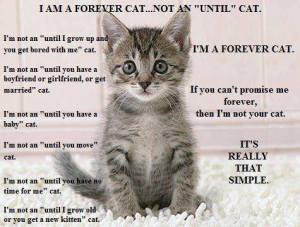 I Am a Forever Cat