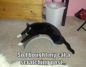 I Bought My Cat a New Scratching Post