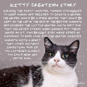 Kitty Creation