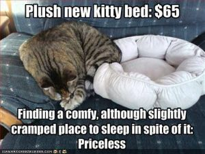 Plush New Kitty Bed