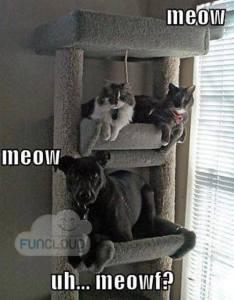 Uh, Meow