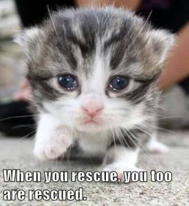 When You Rescue