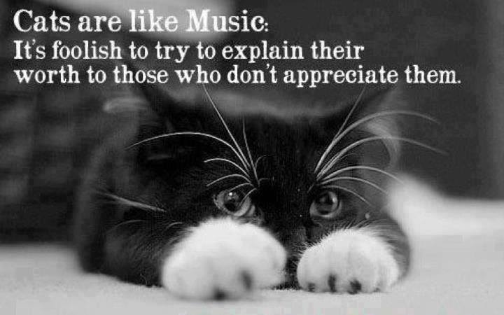Image result for cat quotes