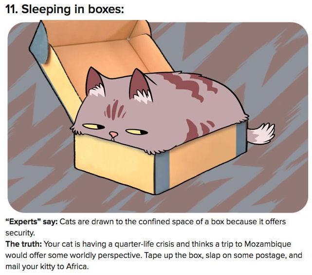 truth-behind-cat-behavior-11