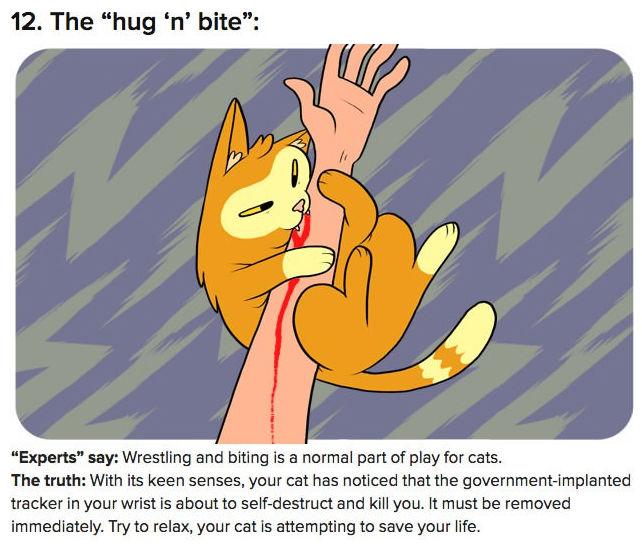 truth-behind-cat-behavior-12