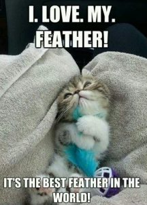 I Love My Feather