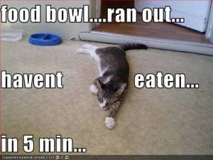 Haven't Eaten