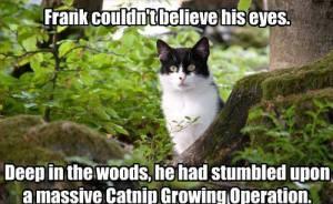 Massive Catnip Growing Operation