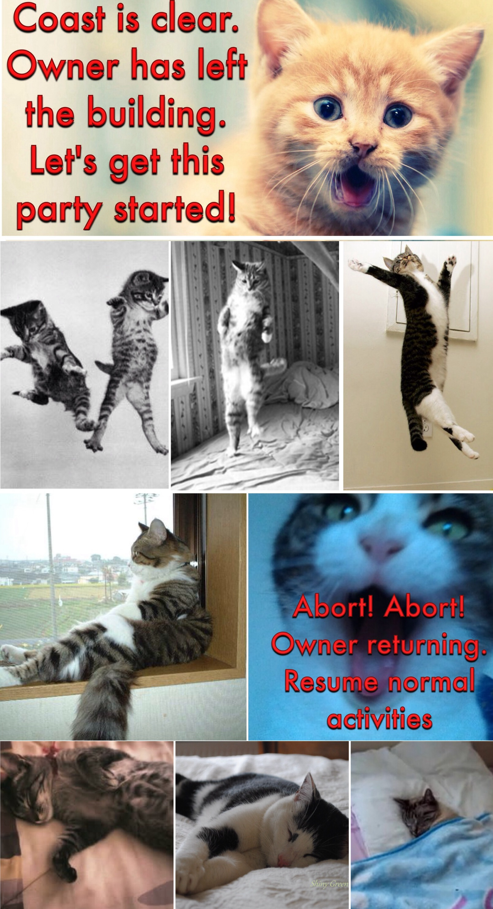 Happy fathers day mr cat marions superkitty tales and get this party started sciox Gallery