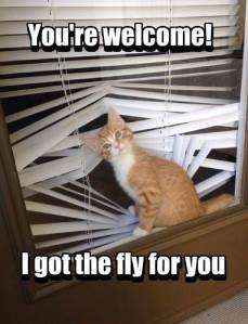 I Got the Fly