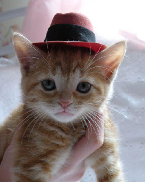 Happy fathers day mr cat marions superkitty tales and my dancing hat sciox Gallery