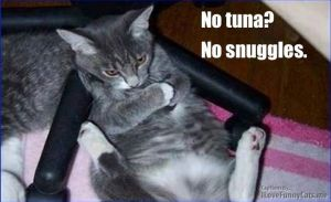 No Tuna No Snuggles