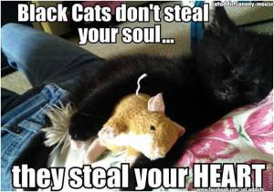 Black Cats Don't Steal Your Heart