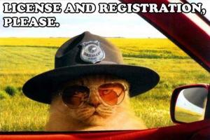 Officer Cat