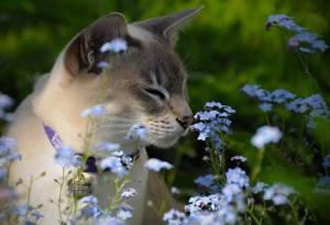 Smelling the Flowers Along the Way