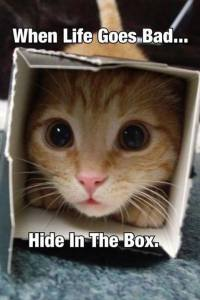 When Life Goes Bad, Hide in a Box