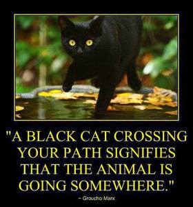 A Black Cat Going Somewhere