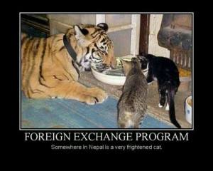 Foreign Exchange Program