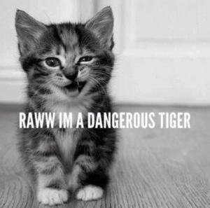I'm a Dangerous Tiger