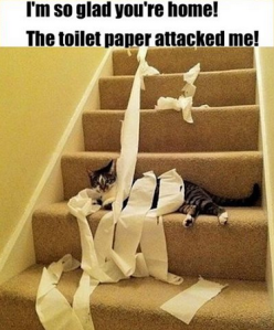 Toilet Paper Attack