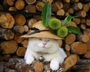 Cute Bonnet