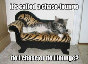 Do I Chase or Do I Lounge