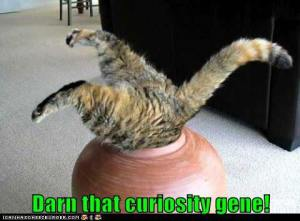 Curiousity Gene