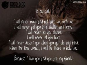 To My Cat