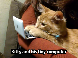 Kitty and His Computer