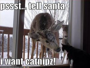 Tell Santa I Want Catnipz
