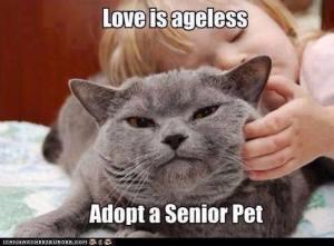 Adopt a Senior Pet