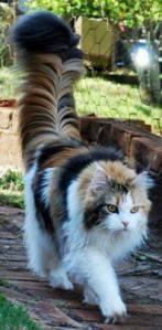 Amazing Tail