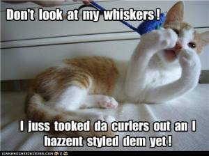 Don't Look At My Whiskers