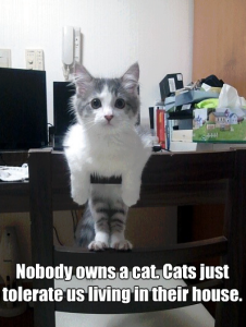 No One Owns a Cat