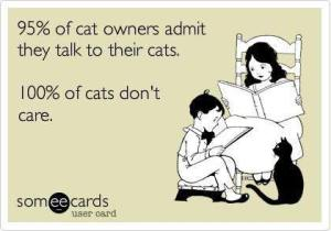 Talk to Cats