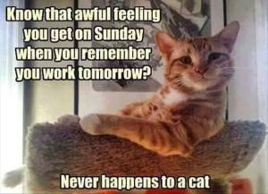 Never Happens to a Cat