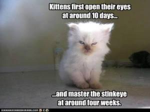 Stinkeye